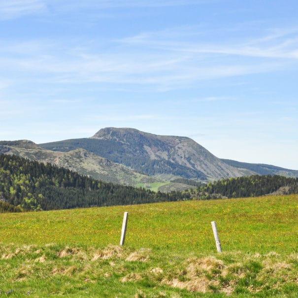Vue sur le Mont Mézenc depuis une prairie