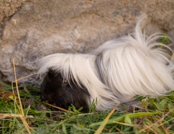 Bianca mange de l'herbe