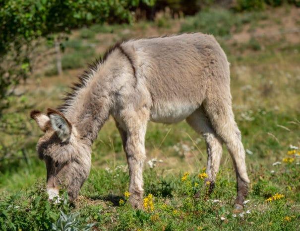Kirikou dans le pré broute de l'herbe verte