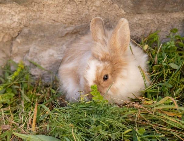 Perle mange de l'herbe fraîche