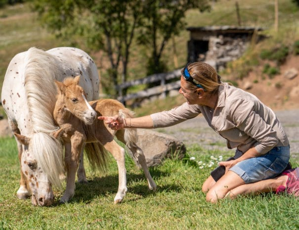 Sonja et son poulain se laisse caresser par une cliente