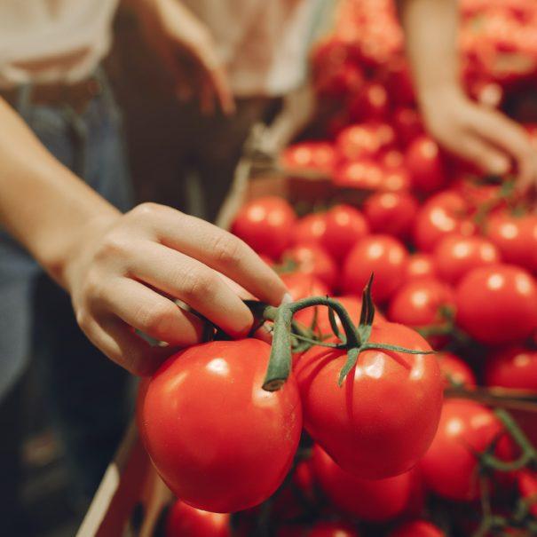 Étalage de tomate à Fay-sur-Lignon